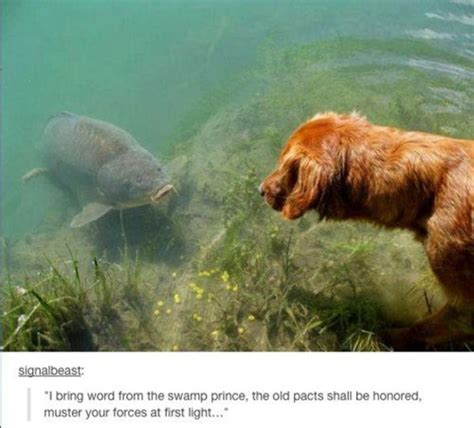 12 Hilarious Dog Photos That Will Put A Smile On Your Face
