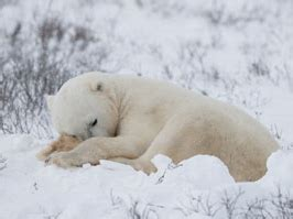 Animals Get Ready for Winter | Scholastic